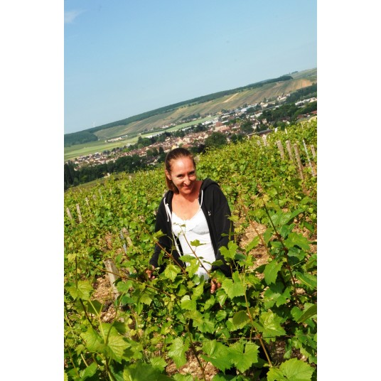 Moreau-Naudet, Chablis, Chardonnay